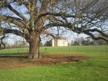 Bexley, Danson House through the Charter Oak, Kent © Marathon